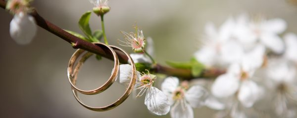 wedding rings sitting on a branch with flowers